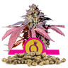 Purple Queen frön i storpack