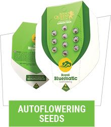 autoflowering-cannabis-seeds