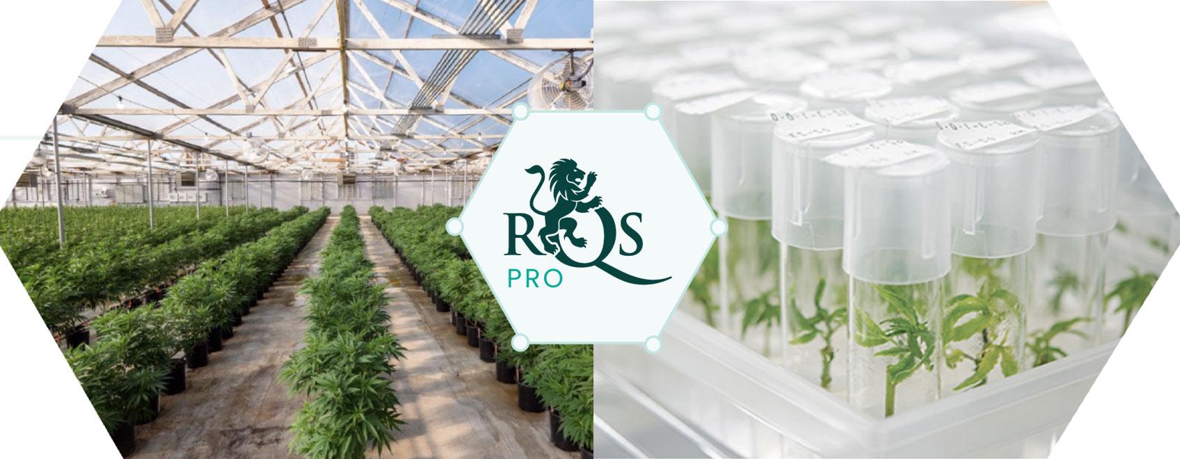 RQS Pro ledande cannabisinnovation och utveckling
