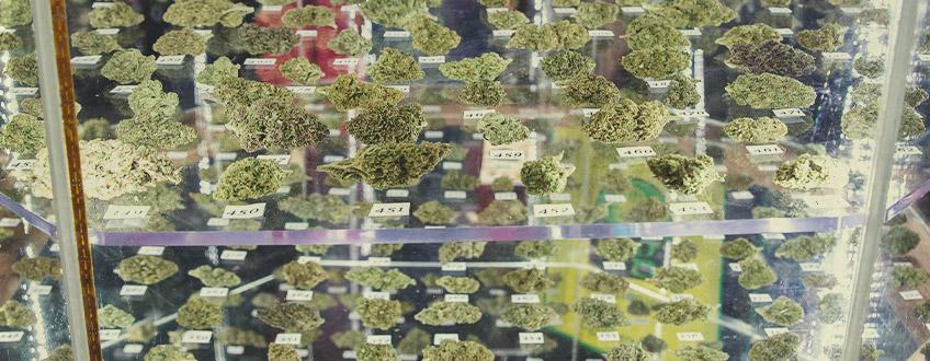 RQS Cannabis Cup-vinnare