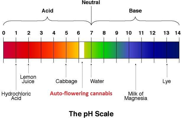 The perfect PH value for a cannabis plant