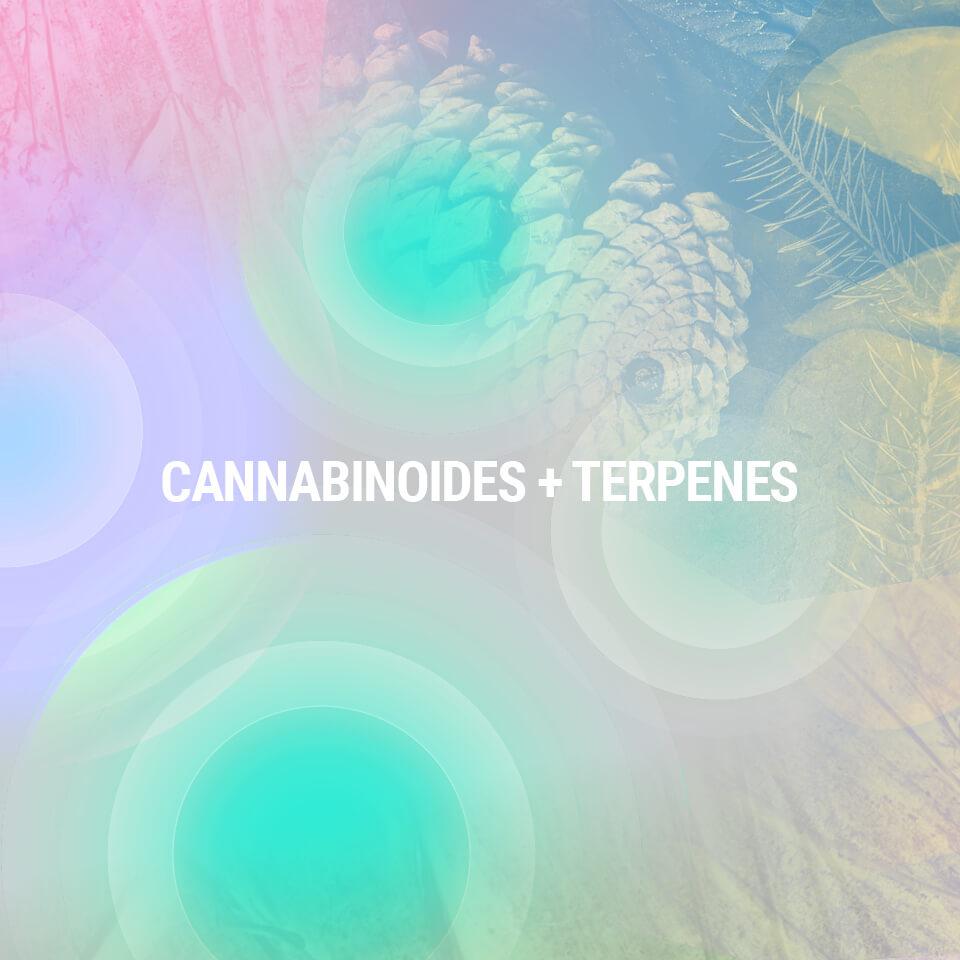 Förstå Cannabisplantans Beståndsdelar