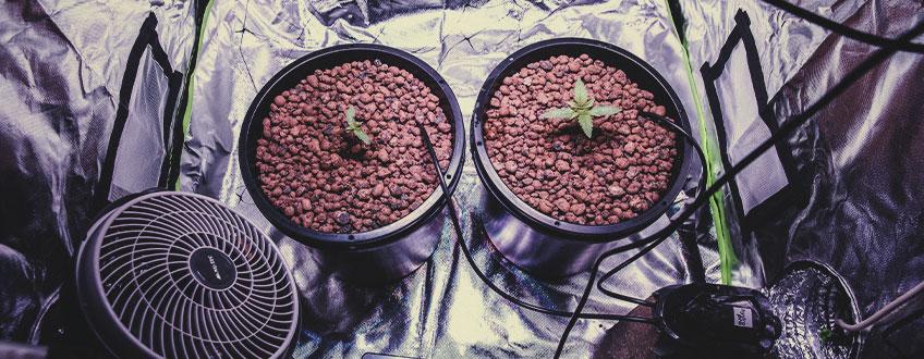 Hur Mycket Tid Krävs Det För Att Odla Cannabis Inomhus